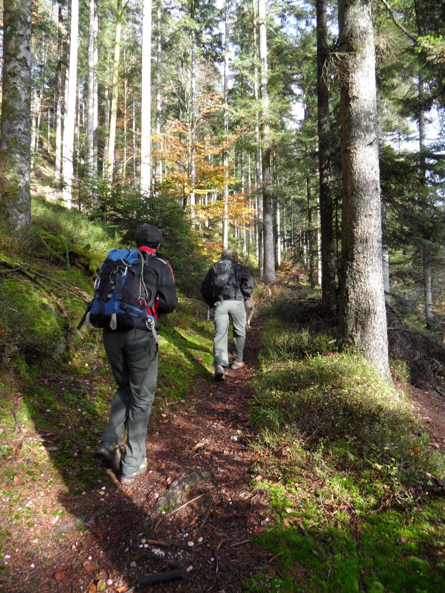 randonnée tour du lac de Pierre Percée